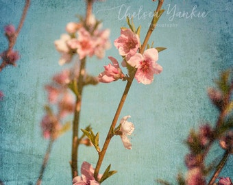 Pink Blossoms Fine Art Print, Pink Flowers