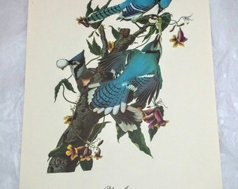 1960's Audubon print Bluejays