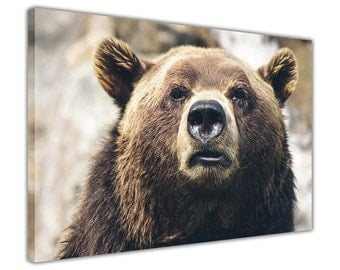 Grizzly Bear on a Framed Canvas Wall Art Print Home Decoration Photos Nature Images Animal Pictures 18 mm Thick Frame