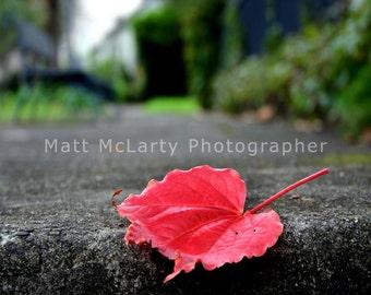 Fallen Colour