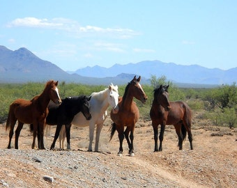 Horses in the Arizona desert