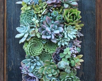 "15.5"" x 11"" Picture Framed Succulent Vertical Garden Made to Order"