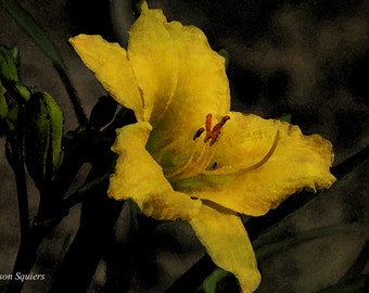Yellow flowers, day lily, flower photography, textured wall art, lily, floral art, botanical print, dark floral, flower wall art, daylily