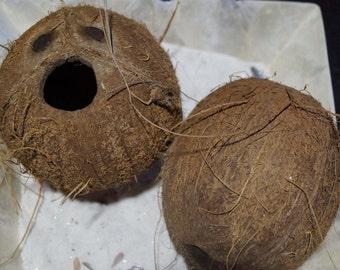 Whole Coconut, Authentic Coconut, Real Coconut, Wholesale Coconut, Bulk Coconuts for Nautical