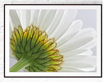 Daisy Print, Flower Photography, Flower Wall Art, Daisy Art, White Wall Art, Large Wall Art, Neutral Wall Art, Macro Photography, Daisies