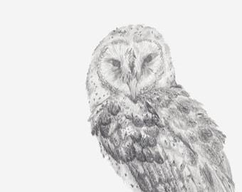 Barn Owl Sketch