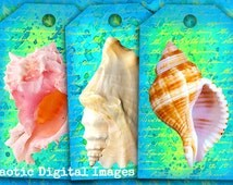 Gift tags printable, SEA SHELLS digital collage sheet, instant download, marine life images, summer gift tags, jewelry cards, making supply