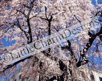Digital download, Printable, Cherry Tree, 100% original