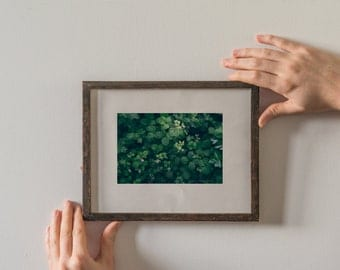 The portrait of blackberry bush in spring. Green, natural light photography, beautiful home wall decor, an unframed photograph