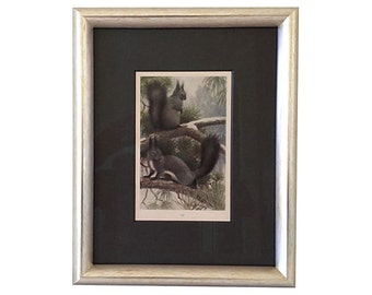 Antique Squirrels Lithograph, C. 1900