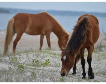 Shacklford Ponies Grazing