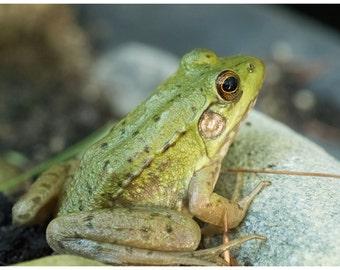 Pastel Green Frog