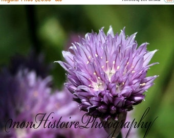 25% off Kay's Flower, Nature Photography