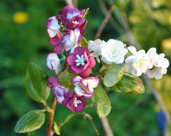 Crown flowers Pkf (5/6 inch)