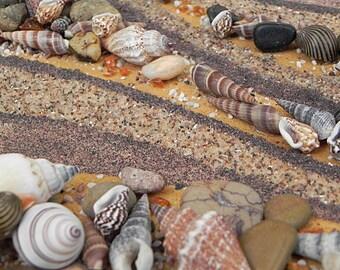 Seashell Still Life, Shell Wall Art, Beach Artwork, 3 D Wall Art, Ocean Art, Sea Life Picture, Rustic Ocean Decor, Nautical Shell Art,