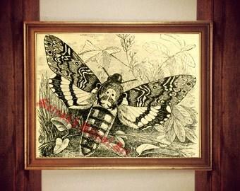 Skull moth print, moth poster, skull moth illustration, moth wall decor, death's-head Hawkmoth print, vintage moth decor #224