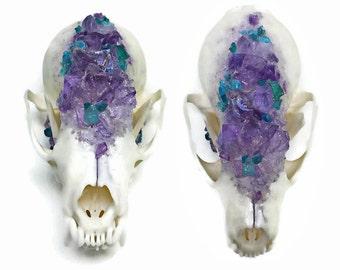Pine Marten Skull - Animal Skull - Taxidermy - Real Animal Skull - Animal Bones - Oddities - Animal Skull Decor - Crystallized Skull