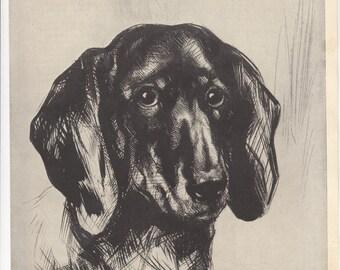 """1937 Portrait/Print Sad Eyed Dachshund/approx 7 3/4"""" X 10.5"""""""
