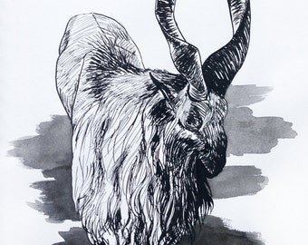 Markhor Middle Eastern Mountain Goat   Original Pen & Ink Drawing 9X12
