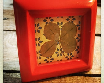 Genuine 4-Leaf Clover Mounted in 3x3 Salmon Frame