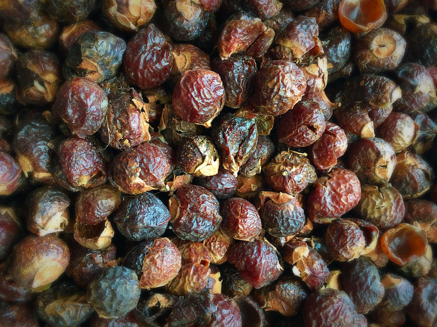 free soap nuts samples