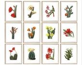 Cactus Art Print SET of 12. cactus prints, cactus wall art, cactus illustration, cactus drawing, botanical cactus prints, cactus garden art