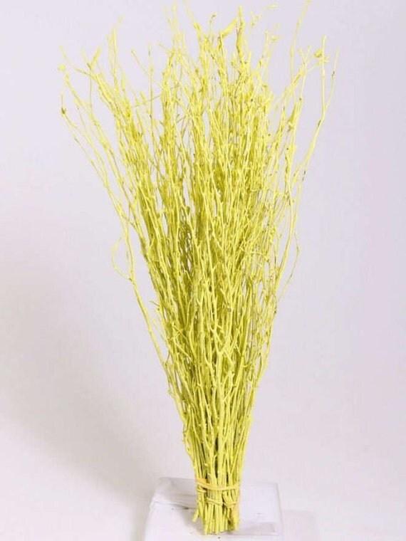 branches de bouleau jaune un bouquet de branches de bouleau. Black Bedroom Furniture Sets. Home Design Ideas