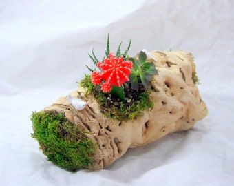 10 Inches Grape Wood Moss and Succulent Planter Centerpiece