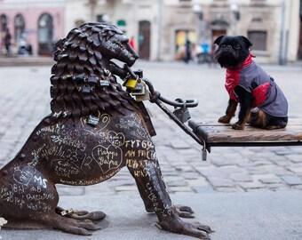 Waterproof Dog Raincoat - Dog Clothing - Pet Clothes