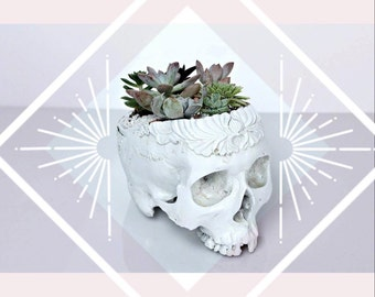 Skull Planter Indi Vintage Planter Large Size, Succulent planter
