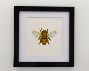 Common Teddy Bear Bee Unframed Miniature Print x 1
