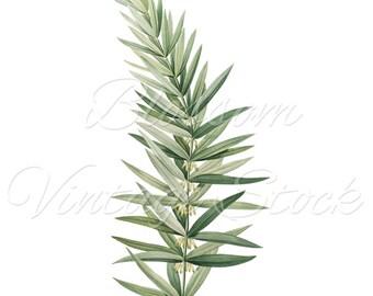 Leaves, Botanical Print, Foliage Botanical Leaf Print, Digital Image, PNG Image for print, digital artwork - INSTANT DOWNLOAD - 1256