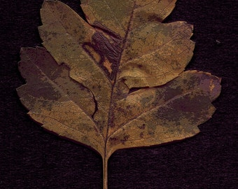 Leaf Photography - One Lone Leaf, One Leaf Photograph, Leaf Photography Print, Botanical Leaf Print, Botanical Photo, Nature Leaf Photo