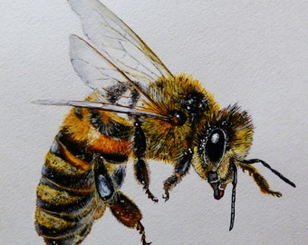 "Honeybee painting, Bee painting, 8""x10"", acrylic on watercolor paper, insect painting, original artwork, home decor, wildlife painting"