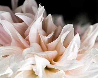 Dahlia, Abstract Photograph, Modern Art, Contemporary Art, Floral, Flower, Modern Floral
