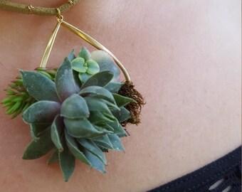 Succulent Goldie