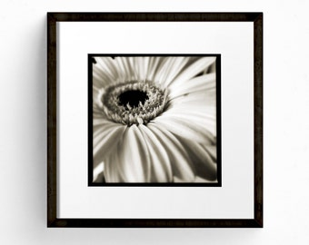 Square Print, Flower Wall Art, Black and White Print, Flower Photograph, Floral Wall Art, Bedroom Art, Romantic Art, Daisy Print
