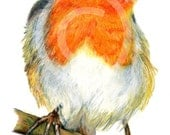 Print of a Robin red breasted garden bird watercolour pencil drawing / A4 or A5 size / gardening, gardeners friend