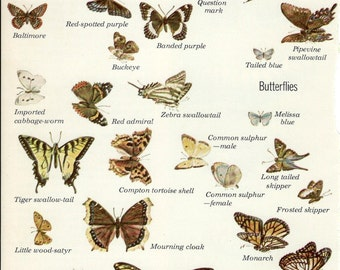 Butterflies and Moths from Audubon Nature Encyclopedia to Frame or for Collage, Scrapbooking, Paper Arts and MORE PSS 2795