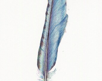 Teal blue feather drawing ~ coloured pencil art work