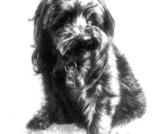 EXPRESS Pencil Pet Portrait Pet Lover Gift Idea 5x7