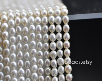 "Oval Freshwater Pearls 3.5mm, Fresh Water Seed Pearl Beads- (PL02-12)/ 15.5"" full strand"