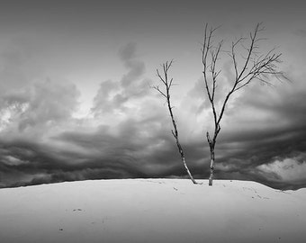 Dead Trees with Wind Swept Clouds over the Dunes at Silver Lake State Park by Lake Michigan No.BW0157 Michigan Landscape Photography