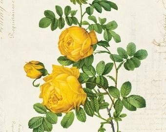 Vintage Botanical Floral on French Ephemera Print, Vintage Rose Print 8x10 P312