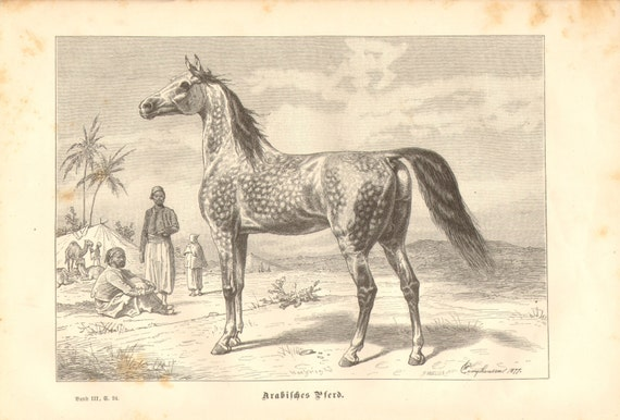 1877 Arabian or Arab Horse Original Antique Engraving