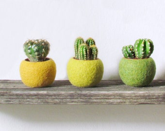 Mini planter set / plant pot / indoor planter / cactus vase / wife gift / home decor / kitchen decor / succulent planter / birthday gift