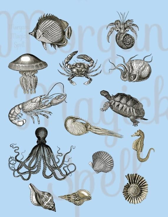 Vintage Sea Life Royalty Free