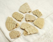 8 fossil sand dollar pieces with beautiful patterns (no.b29)