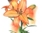 Lily Original watercolour painting OL0916 - Original botanical art - Flower original watercolour painting