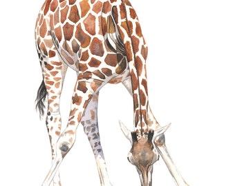 Giraffe Painting - 2014  giraffe watercolor painting - print of watercolor painting A3 size largest print, G2014